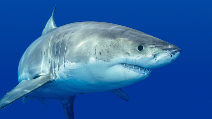Just like humans, sharks have personalities too